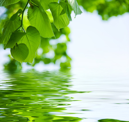 nature background - Leaves and water reflection Stock Photo