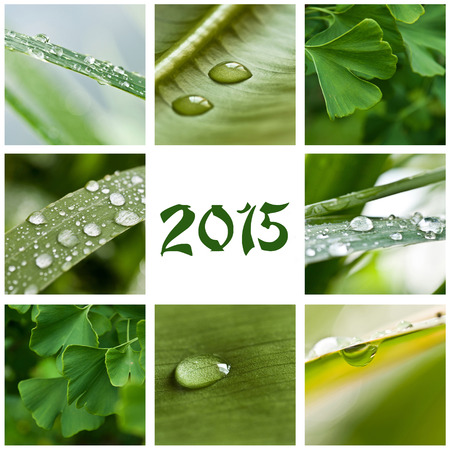 zen collage 2015 photo