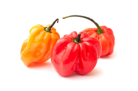 jamaican: jamaican peppers in white background Stock Photo