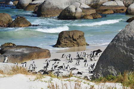 penguins on beach: penguins on the savage beach and rocks -  - South Africa