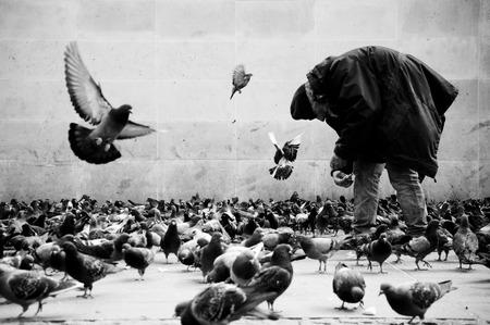 poor man: pobre hombre en palomas que introducen de Par�s