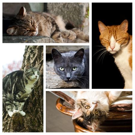 고양이 콜라주 스톡 콘텐츠
