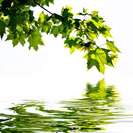 비행기 나무는 물 반사 잎 스톡 콘텐츠