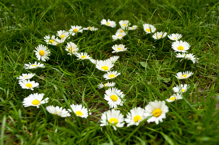 lustful: peace symbol with daisies in the grass
