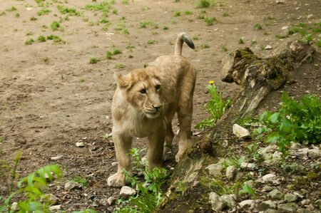cachorro: peque�o cachorro en el parque zool�gico