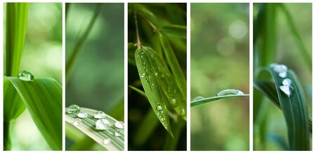 thalasso: raindrops on bamboo leaves  collage