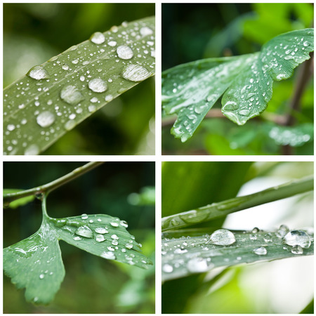 thalasso: drops of rain on  leaves closeup collage Stock Photo