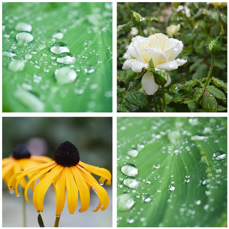 thalasso: rain drops on plant and flowers collage