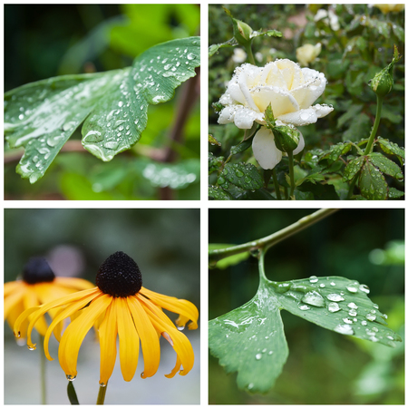 thalasso: rain drops on gingko and flowers collage