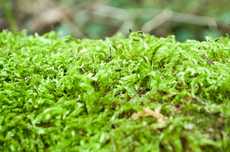 closeup moss on tree in the forest Stock Photo