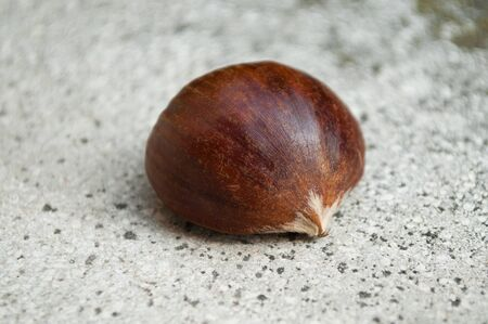 stoned: closeup isolated chestnut on stoned background