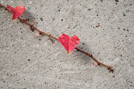 stoned: ivy leaves on stoned wall in autumn