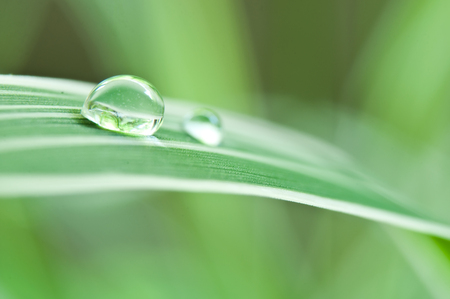 thalasso: closeup of raindrops on bamboo leaves