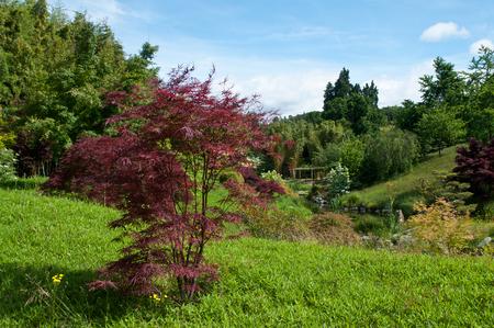 일본 정원에 붉은 단풍 나무
