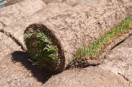 sod: Stack of rolled grass sod for  gardening