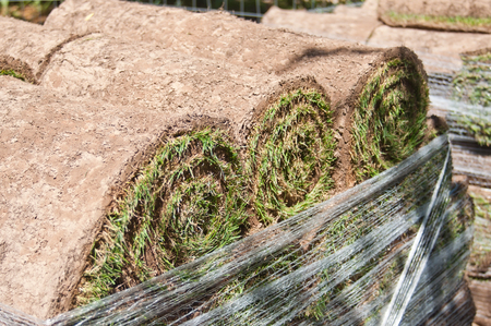grassplot: Stack of rolled grass sod for  gardening