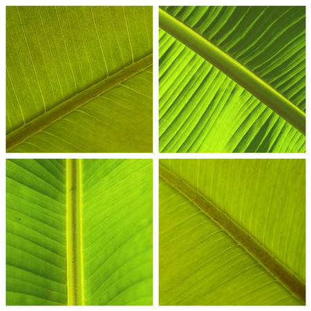 spa collage: closeup of plants leaves texture - collage Stock Photo