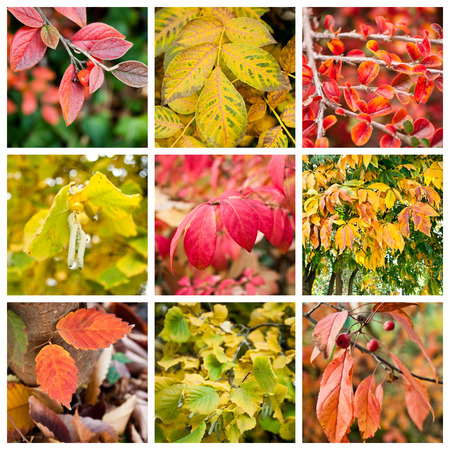 various colors of nature collage Stock Photo