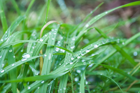 thalasso: closeup of raindrops on grass  in the morning