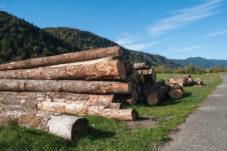 tress: stack of cutted tress in a field