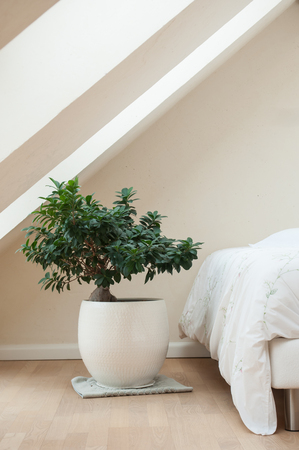 wooden beams: bedroom with zen decorative bonsai and Wooden beams Stock Photo