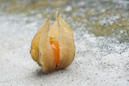 stoned: closeup  of physalis on stoned background Stock Photo