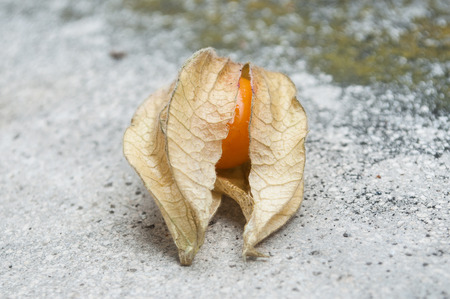 stoned: closeup of physalis on stoned background