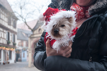 closeup of Shih tzu with christmas hat  in arms in the street