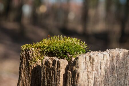 closeup of moss on wood in a forest