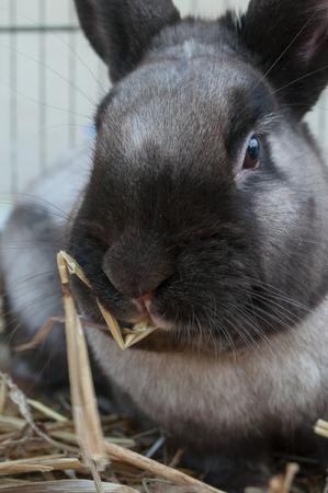 lop lop rabbit white: portrait of brown rabbit in cage