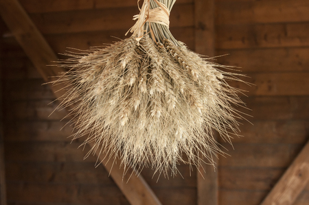 closeup of bouquet of hanging wheat on wooden background