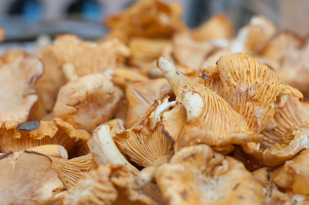 closeup of girolles at the market