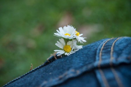 white fabric texture: closeup of daisies bouquet in blue jeans pocket of woman