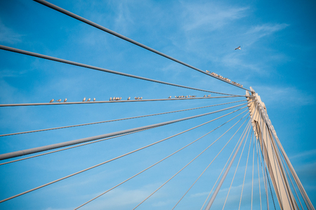 retail of seagulls on suspended bridge on blue sky background Stock Photo