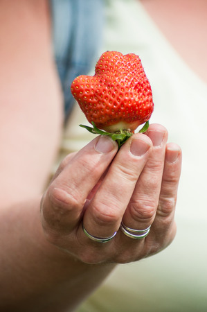 closeup of  woman  with strawberry in hand   Standard-Bild