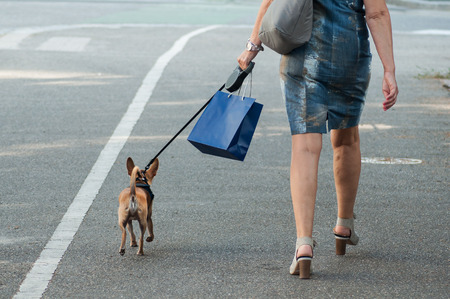 closeup of woman walking in the street with chihuahua dog Stock Photo