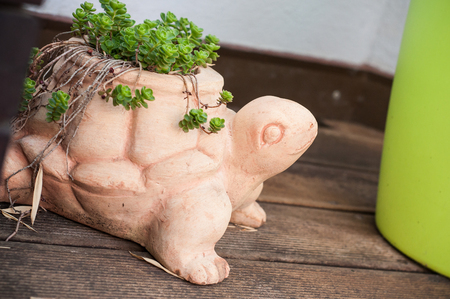 closeup of succulent plant in terra cotta pot in shaped turtle on wooden terrace 写真素材