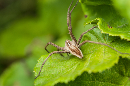 closeup of spider on plant leaf in the garden