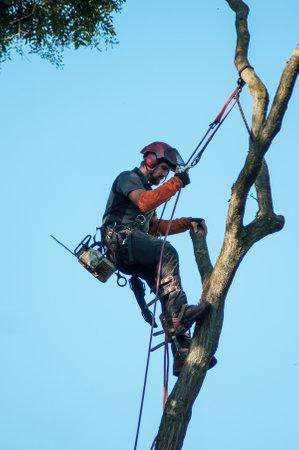 Mulhouse - France - 26 July 2018 - portrait of man cutting a big tree in urban park Editorial