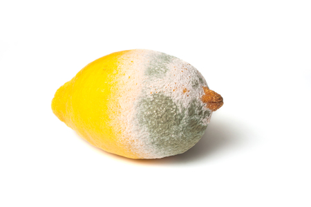 closeup of mold on lemon on white background