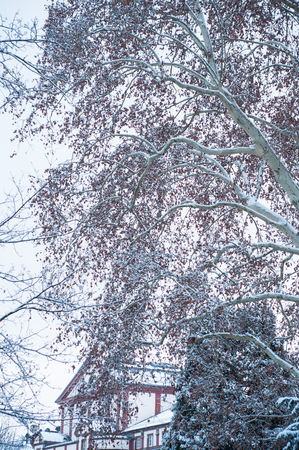 Closeup of snow on trees in urban park