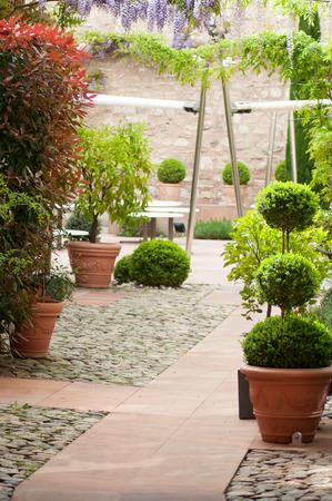 primo piano degli alberi in vaso nel giardino del ristorante di lusso