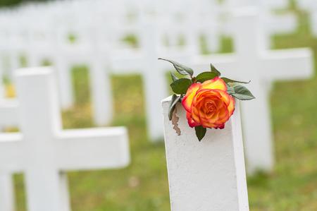 closeup of orange rose on tomb at military cemetery 版權商用圖片