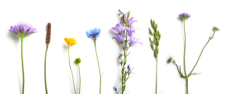 closeup of wild grass and flowers on white background