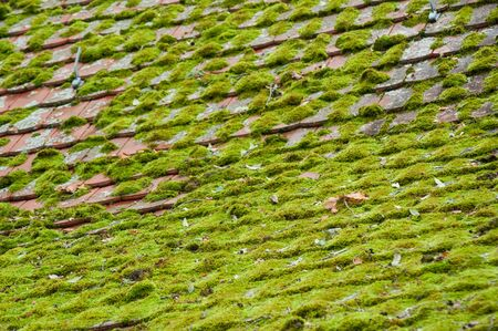 Closeup of tiles of roof covered by moss