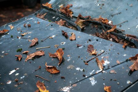 Closeup of autumnal leaves and poop of pigeons on abandoned car Stock Photo