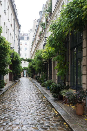 view of typical cobblestone alley with green vegetation in Paris
