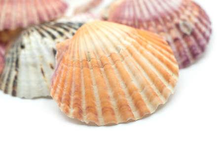 Closeup of beautiful seashells on white background