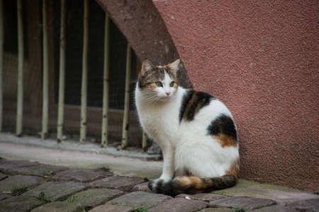 Portrait on beautiful cat standing in the street Stockfoto