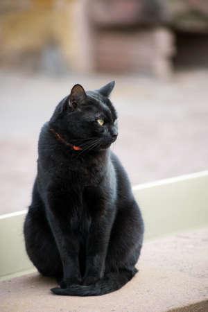 Portrait of black cat standing in the street Stockfoto